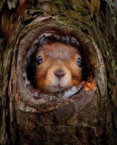 :o) - Animals wild, Animals cutest, Animals funny, Animals drawings Animals And Pets, Baby Animals, Cute Animals, Strange Animals, Beautiful Creatures, Animals Beautiful, Magical Creatures, Tierischer Humor, Cute Squirrel