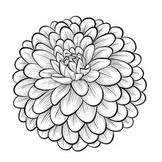 Stock vector of 'beautiful monochrome black and white dahlia flower isolated on white background. Hand-drawn contour lines and strokes.'