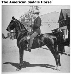 EQESTRIAN: Gypsy Queen was a top American saddle horse in the first decade of the 20th century. The horse appeared at the Chicago shows of 1903 and 1904 and won many horse show competitions.
