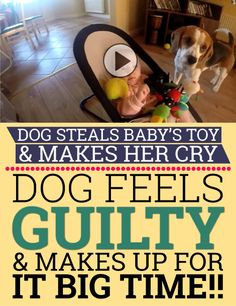 This is just an awesome video! How funny that the dog brings the baby a PlayStation controller... future gamer :)