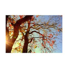 Satellite True ❤ liked on Polyvore featuring pictures, backgrounds, photos, autumn, pics and filler