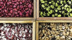 MEET THE COOL BEANS DESIGNED TO BEAT CLIMATE CHANGE.    A planet that is warming at extraordinary speed may require extraordinary new food crops. The latest great agricultural hope is beans that can thrive in temperatures that cripple most conventional beans. They're now growing in test plots of the International Center for Tropical Agriculture, or CIAT, in Colombia…