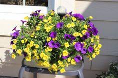 Pretty Planters (20 of them)! - Momcrieff