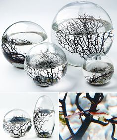 EcoSphere - self contained aquatic ecosystem. Enclosed in glass, this miniature ecosystem is self sustaining with the perfect balance of animal and plant life