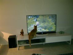 Nuur watches tv. Anything with animals is interesting.