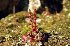 Fotos de: Cáceres - Parque Natural de Monfragüe -Flora del entorno