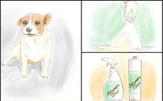 5 Ways To Get Rid of Dog Urine Odors