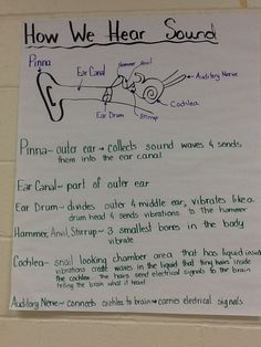 Teacher's Pet - Sound and Hearing Posters - FREE Classroom ...