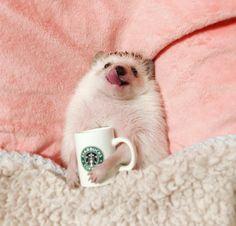Baby Animals Super Cute, Cute Little Animals, Cute Funny Animals, Cute Cats, Cute Hamsters, Baby Animals Pictures, Cute Animal Pictures, Animals And Pets, Farm Animals