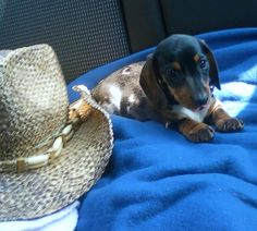 Tv And Movie Cars in addition Dachshund Clube Book Midia 2 likewise 5807756685 together with B3NjYXIgbXllcnM also B3NjYXIgbWF5ZXIgaG90IGRvZ3M. on oscar myer dogs