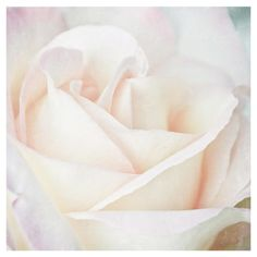 Bring a garden-chic touch to your gallery wall with this serene art print, showcasing a close-up image of a blooming rose.   Product: