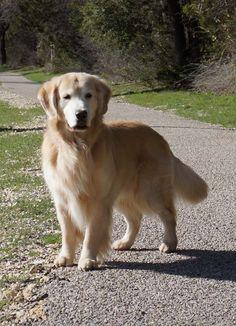 Handsome dog Jack at the park.