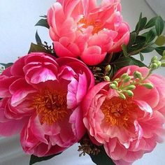 40 Ideas Pink Succulent Painting For 2019 Exotic Flowers, Types Of Flowers, Pretty Flowers, Pink Flowers, Peony Flower, Flower Wall, Foto Cv, Pink Succulent, Peony Painting