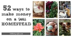 making money on a small homestead