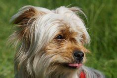 Lola the dog Dogs, Animals, Mongrel, Germany, Pet Dogs, Animales, Animaux, Doggies, Animal