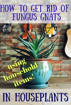 how to get rid of fungus gnats in houseplants - Garden Care, Garden Design and Gardening Supplies Plant Bugs, Plant Pests, Garden Pests, Container Gardening, Gardening Tips, Indoor Gardening, Bucket Gardening, Urban Gardening, Hydroponic Gardening