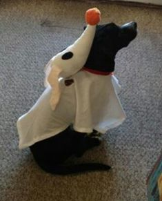 Top 10 Incredibly Easy DIY Dog Costumes If you're one of those dog owners who cannot resist an opportunity to dress up your pet, there are opportunities all year long. Dress Up Your Pets Day, Halloween and any other excuse will work for most of us! Dog And Owner Costumes, Diy Dog Costumes, Pet Halloween Costumes, Christmas Costumes, Fall Halloween, Disney Dog Costume, Creative Costumes, Halloween Dress, Zero Dog Costume