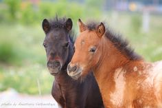 Pony cuties!