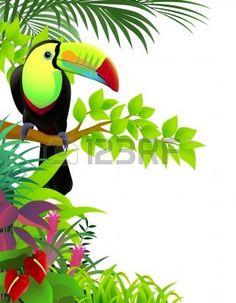 Tucan en la jungla