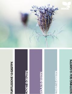 Thinking of going grey and purple