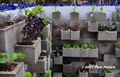 Whole cinder block wall garden.
