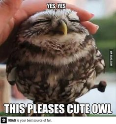 Yes, Yes this pleases cute owl