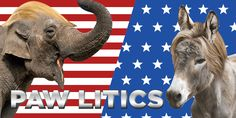 Paw litics!  #pamily Animal Design, Elephant, Pets, Animals, Animales, Animaux, Animal, Animais, Elephants