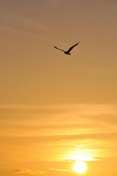 Beautiful...and I have a lot of respect for anyone who can photograph birds in flight...