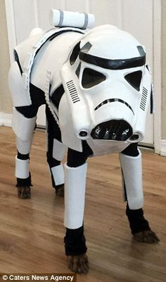 May the paws be with you! Sci-fi obsessed dog owner creates incredible costumes for her pet pooch - including a Star Wars Stormtrooper, a Ghostbuster, and Iron Man   Read more: http://www.dailymail.co.uk/femail/article-3296699/May-paws-Sci-fi-obsessed-dog-owner-creates-incredible-costumes-pet-pooch-including-Star-Wars-Stormtrooper-Ghostbuster-Iron-Man.html#ixzz3q3jjTciV  Follow us: @MailOnline on Twitter | DailyMail on Facebook #Dogs #StarWars