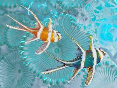 Vittoria Amati photographs the marine life around the coral reefs of Sulawesi, Indonesia - Telegraph