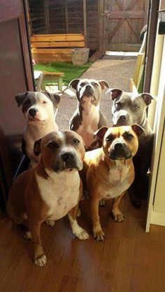 I'd love a plot of land so I could rescue Staffies and give them lots of love ❤️ and live happily ever after