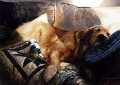 As the sun beats down through the window, this retriever has nuzzled up on the couch and creating GOLDEN DREAMS.