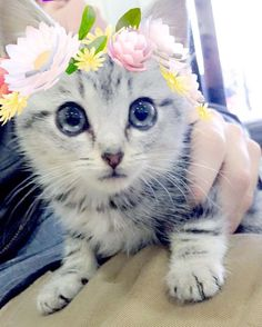 Cute kitty with flowers filter. Kittens Cutest, Cats And Kittens, Cute Cats, Funny Cats, Animals And Pets, Baby Animals, Cute Animals, Funniest Snapchats, Snapchat Filters