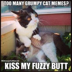 Too many Grumpy Cat memes? Kiss my fuzzy butt.
