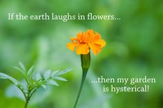 Does your garden have a sense of humour? :) haha