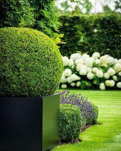Yes Rebecca #love #hydrangeas #topiary #lavender #boxhedge #wisteria #garden #magnificent #formalgarden