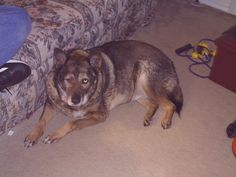 Maggie ???? - 2011 (Probably about 20 years old per the vet.)