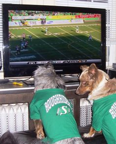 Go Riders! Go Rider, Samsung, Pets, Animals And Pets