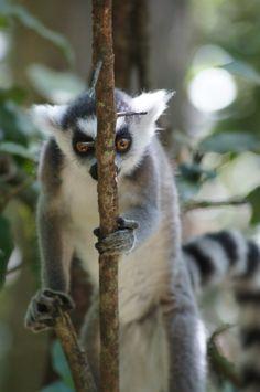 Zuidafrika - South Africa - Monkey
