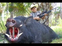 Wild boar hunting, videos de caza de jabali, chasse au sanglier HD #entrepreneur #success #video - Why Waste Your Time With a Day Job... When You Could Be On The Fast Track To Your Retirement. Visit http://igrownet.com/harmaniGrow/