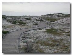 """""""Into the Dunes""""  (Asilomar Beach, Pacific Grove, California)"""