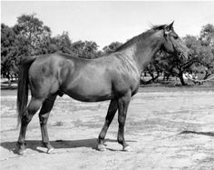 Bold Venture. Won The Kentucky Derby and Preakness Stakes in 1936.  King Ranch: A Classic Racing Legacy | America's Best Racing