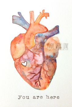 Anatomy of Love Human Heart Watercolor Print by stars0aked on We Heart It