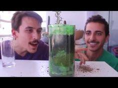 Como fazer mudas com galhos de hortelã, manjericão e alecrim, alegre seu jardim - YouTube