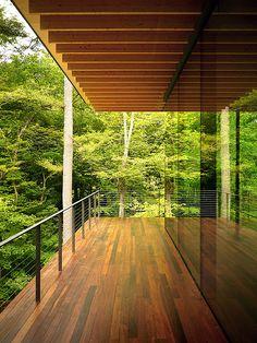 Treetop perspective.