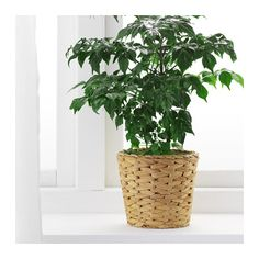 FRIDFULL Plant pot  - IKEA
