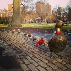"""""""Duckling Sculpture"""" (1987, Bronze on Old Boston cobblestones), by Nancy Shön, is the sculpture of eight ducklings and their mom at the Boston Public Garden and is one of Boston's most photographed spots. This sculpture has been placed as a tribute to Robert McCloskey whose story 'Make Way for Ducklings' has made the Boston Public Garden familiar to children throughout the world. It was two weeks after Christmas on the day taking this picture, so you may see them wearin...(read more on the…"""