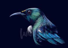 New Zealand Tui art print by artist Lamai Anne Animal Paintings, Animal Drawings, Tui Bird, Nz Art, Artwork For Home, Scratchboard, Guache, Landscape Artwork, Watercolor Artwork