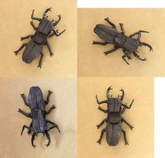 Stag Beetle 1.0 by Philogami, via Flickr