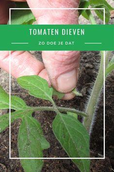 Herb Garden, Vegetable Garden, Garden Plants, House Plants, Gardening Tips, Harvest, Fruit, Vegetables, Nature